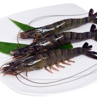 RAW BLACK TIGER SHRIMP